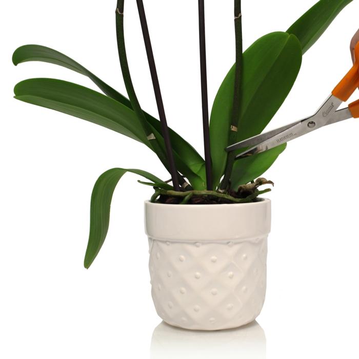 orchidée conseils comment entretenir