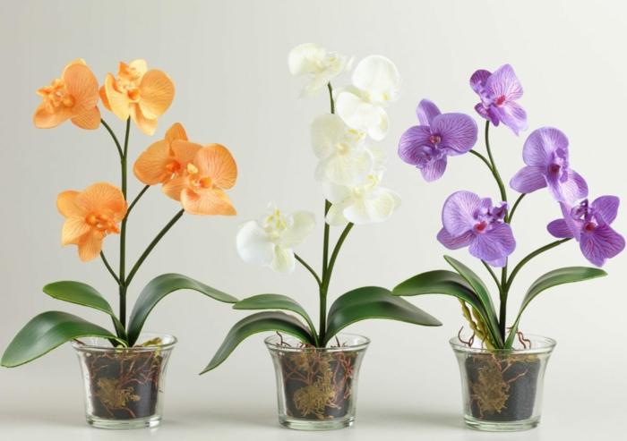 orchidée déco intérieur