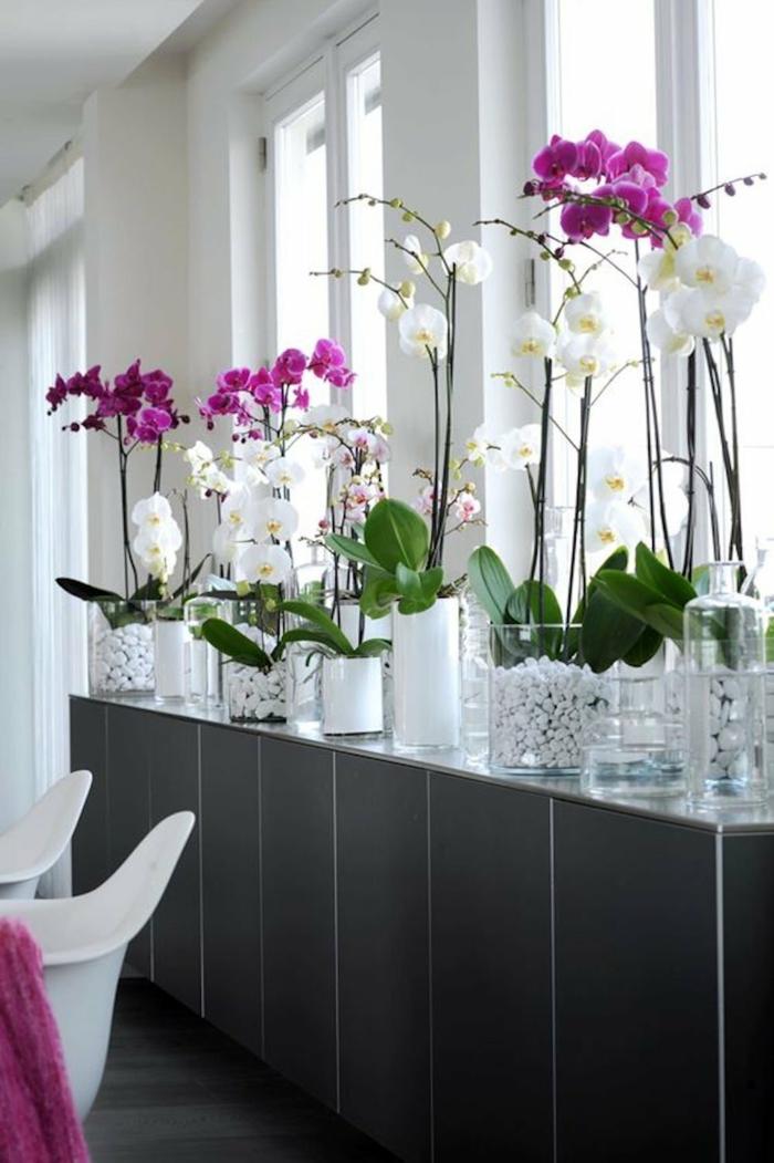 orchidée où installer