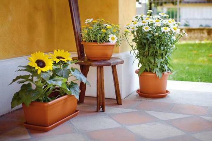 plantes et pots habitation moustique tigre