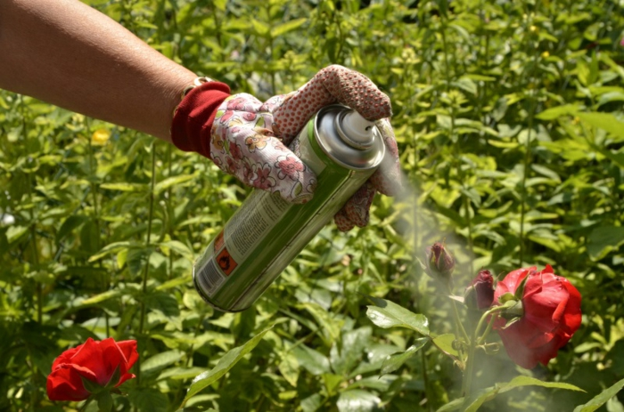 protéger les fleurs anti-puceron naturel