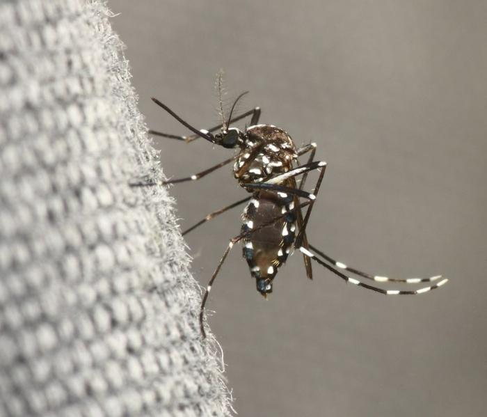 se débarrasser du moustique tigre