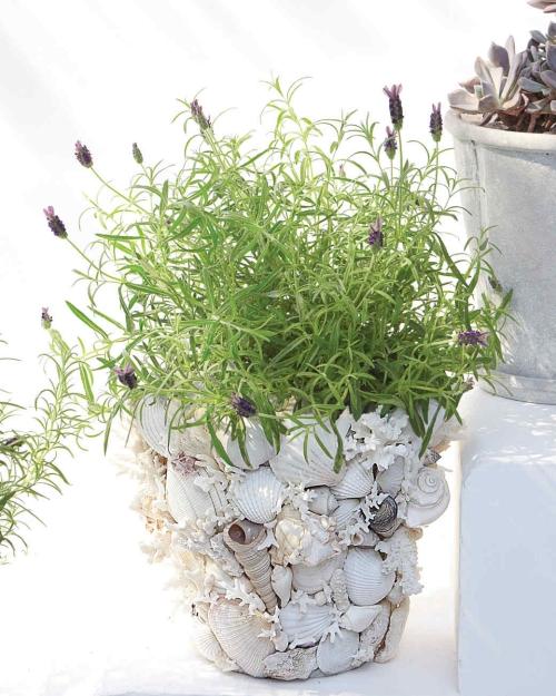 Idées d'artisanat de coquillages pots aux fleurs originales