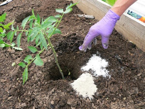 sel d'epsom pour fortifier les plantes de jardin
