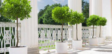 Plante en pot terrasse: comment créer un petit jardin ...