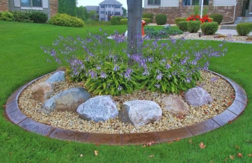 bordures de jardin un arbre au milieu de fleurs bleues