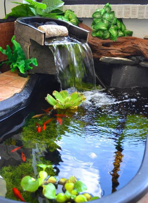 déco jardin fontaine petit lac avec des plantes aquatiques
