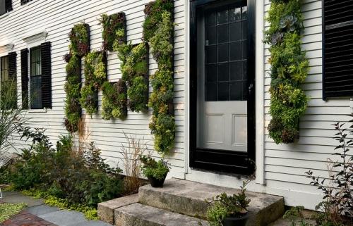 déco pour mur extérieur disposition verticale des plantes