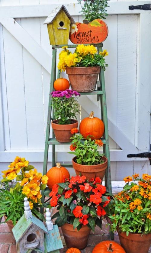 décoration citrouille échelle transformée en jardinière