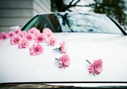 décoration voiture mariage longue rangée de marguerites