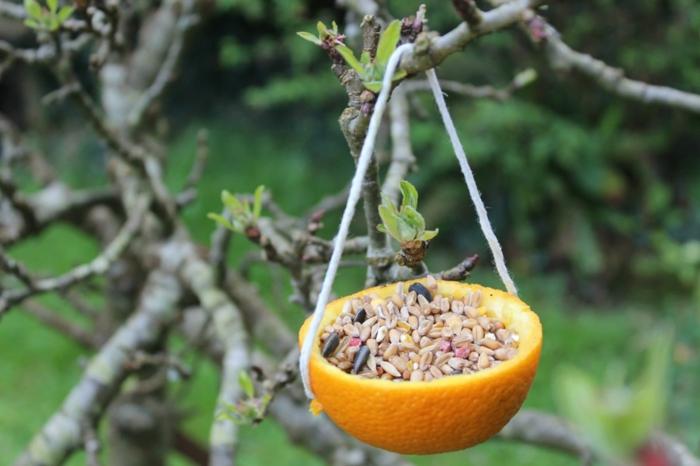 diy mangeoire oiseaux d'orange
