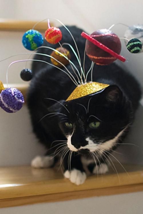 idée déguisement Halloween chapeau original pour votre chat