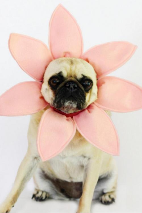 idée déguisement Halloween couronne rose pour la tête