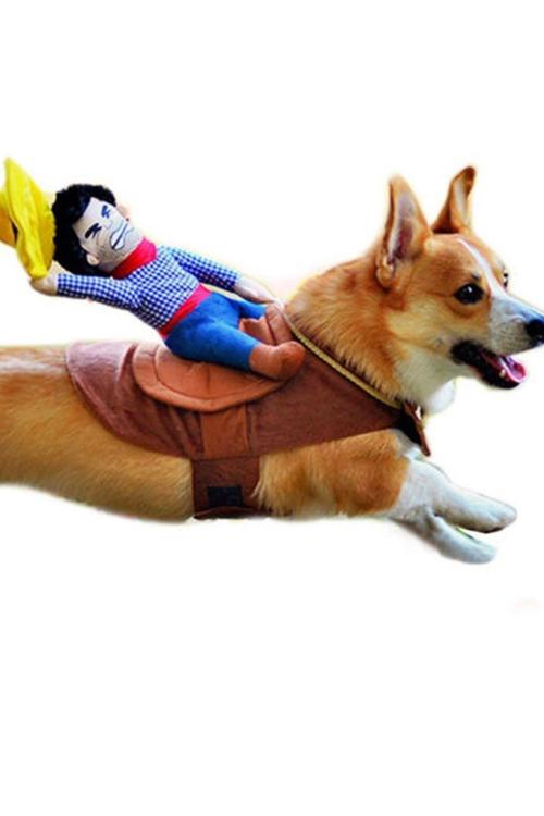 idée déguisement Halloween poupée sur le dos du chien
