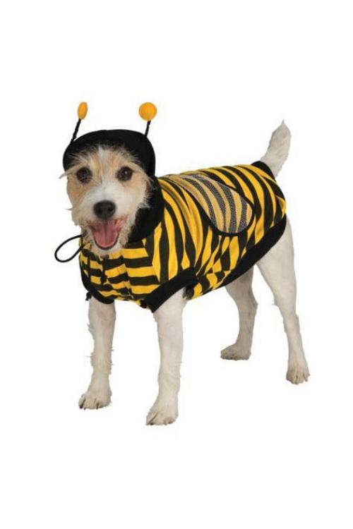 idée déguisement Halloween pour un chien toujours en mouvement