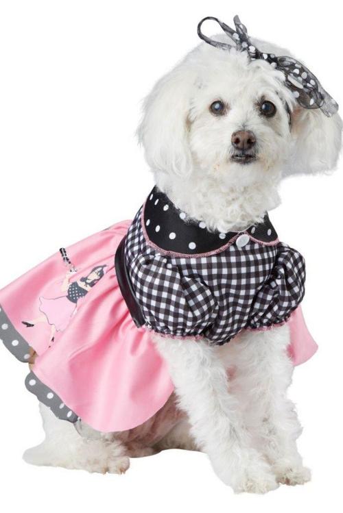 idée déguisement Halloween robe élégante pour un petit chien