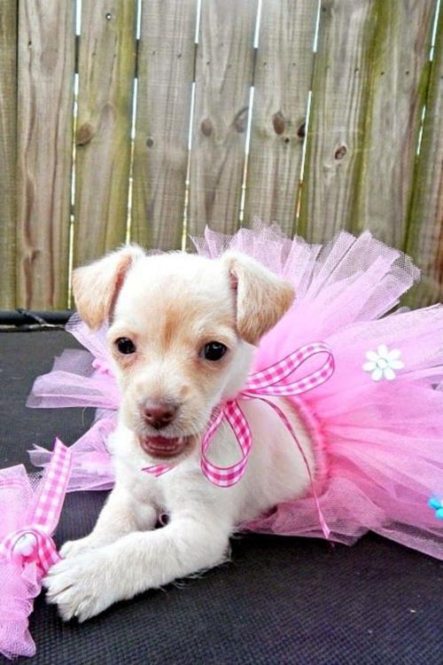 idée déguisement Halloween robe de petite princesse en rose