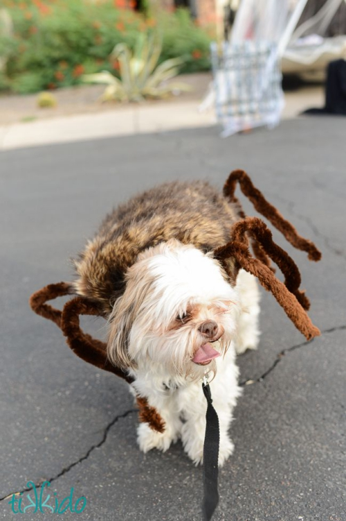 idée déguisement Halloween une peau d'araignée