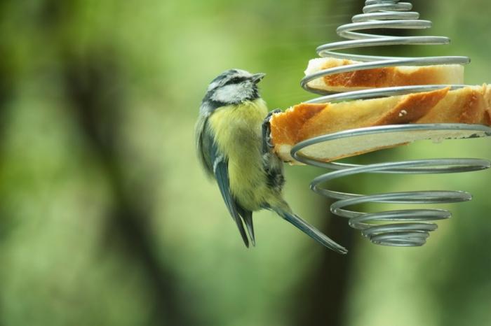 idée originale mangeoire oiseaux