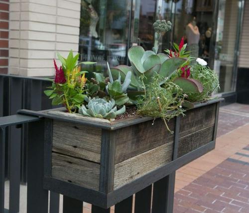 jardinière balcon plantes succulentes