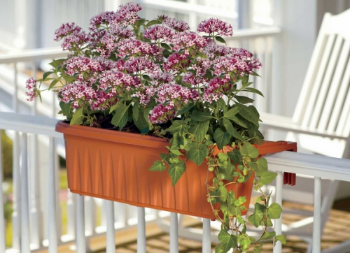 jardinière balcon terrasse ensoleillée