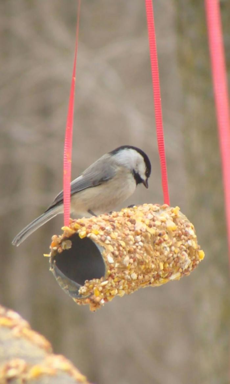 mangeoire oiseaux comment réaliser