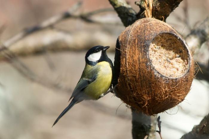 mangeoire oiseaux de noix de coco