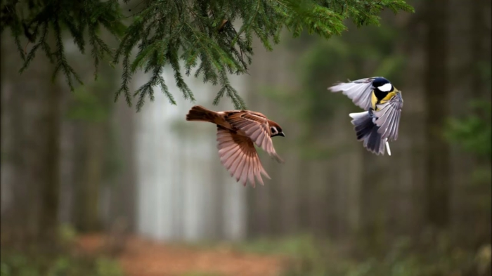 mangeoire oiseaux idées