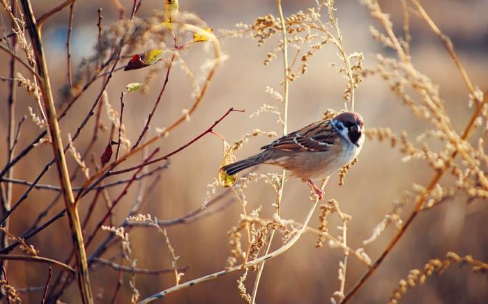mangeoire oiseaux nos idées diy