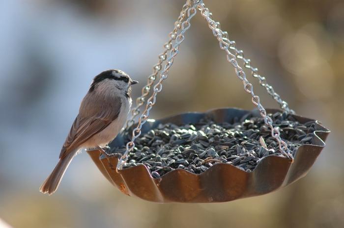mangeoire oiseaux simple à faire