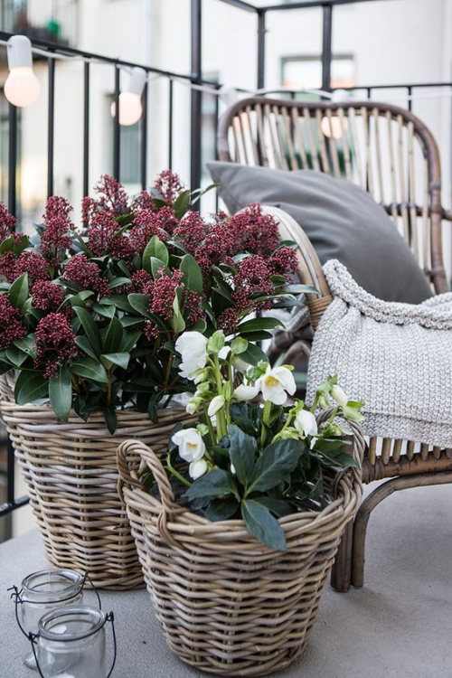 plante en pot terrasse grand espace vitré