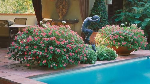 plante extérieure en pot déco piscine