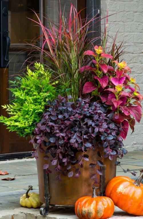 plante extérieure en pot grand pot en cuivre