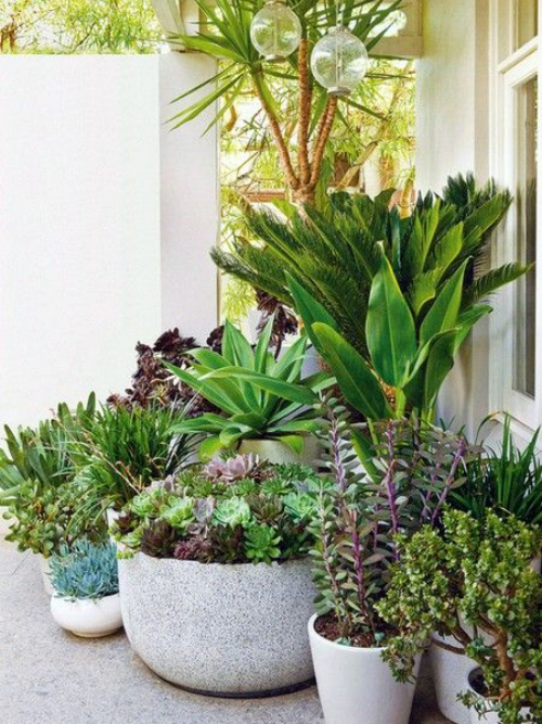 plante extérieure en pot grands pots lourds