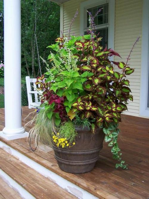 plante extérieure en pot large terrasse
