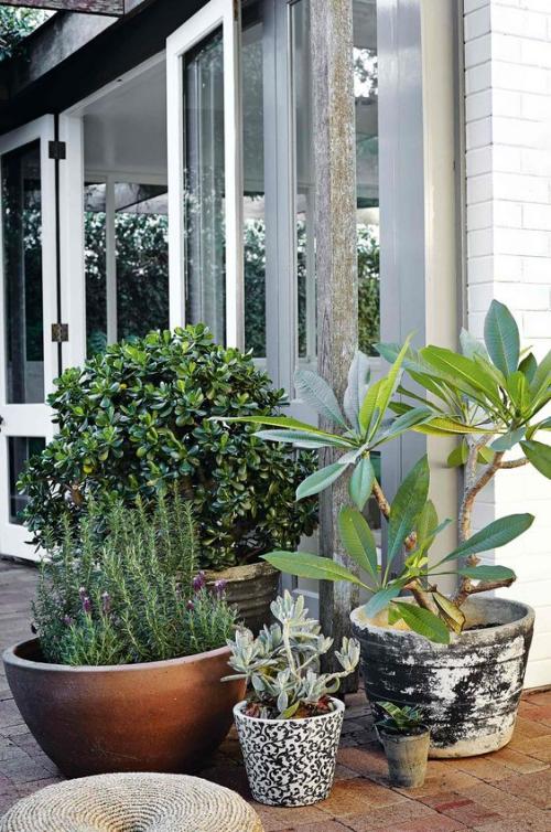 plante extérieure en pot plantes vertes en pots