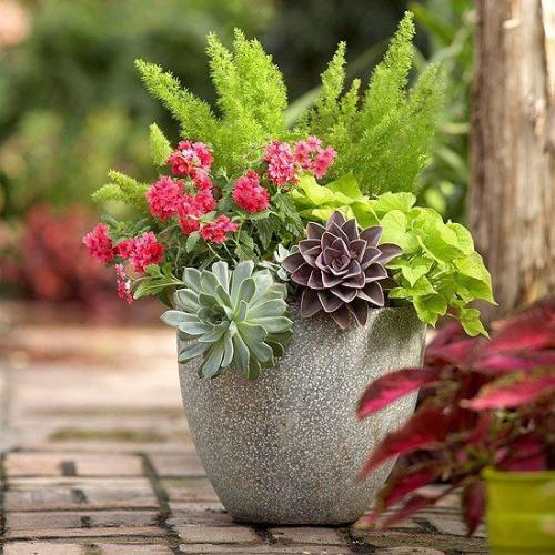 plante extérieure en pot pot lourd en béton
