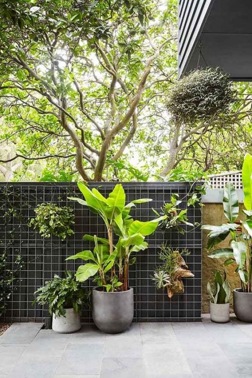 plante extérieure en pot rangée de pots adossés au brise-vue