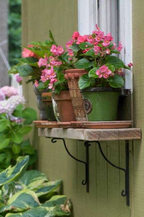 plante extérieure en pot rebords pour pots