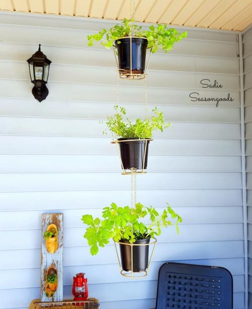 plante extérieure en pot terrasse à l'abri