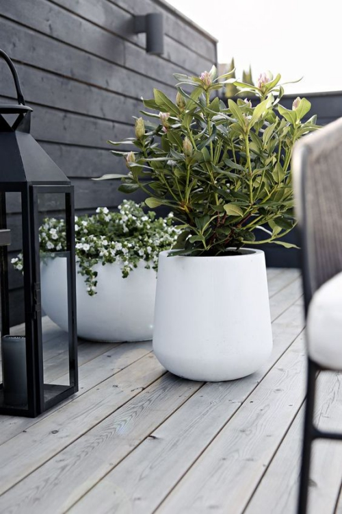 plante extérieure en pot terrasse au sol en bois