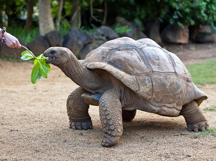 voyage lune de miel observer les tortues seychelles