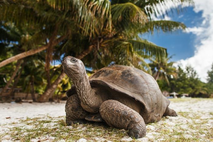 voyage lune de miel seychelles activités
