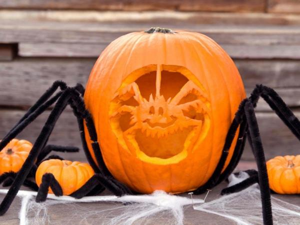 creuser une citrouille pour halloween grande araignée