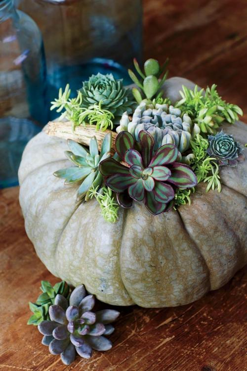idée activité manuelle automne citrouille pleine de succulentes