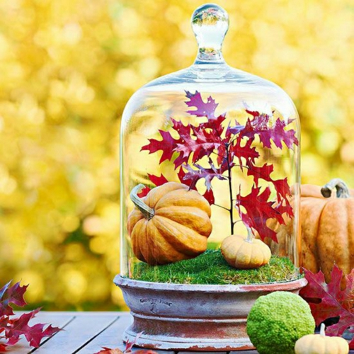 idée activité manuelle automne diy citrouille sous cloche