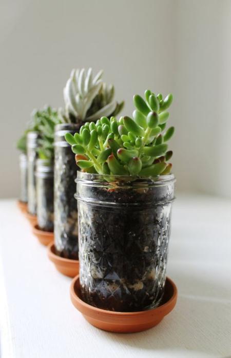 terrarium bocaux dans des bols en céramique