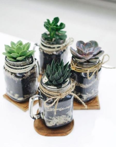 terrarium bocaux et verres
