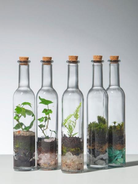 terrarium bouteilles bouchonnés