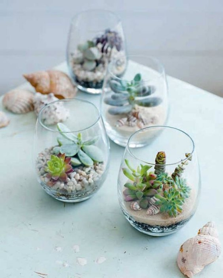 terrarium gros verres avec des coquillages autour